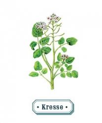 Kresse