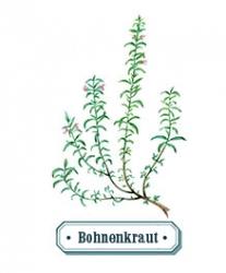 Bohnenkraut