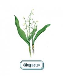 Muguete