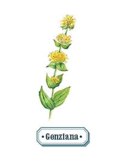 genziana
